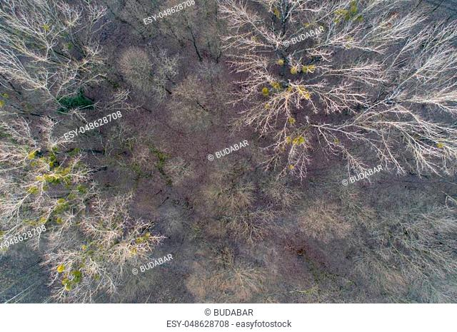 Top view of deciduous forest in winter time shoot from drone