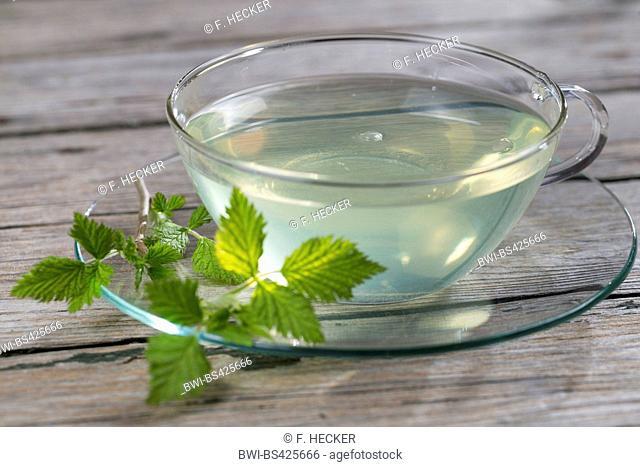 European red raspberry (Rubus idaeus), fresh raspberry leaf tea, a cup of tea