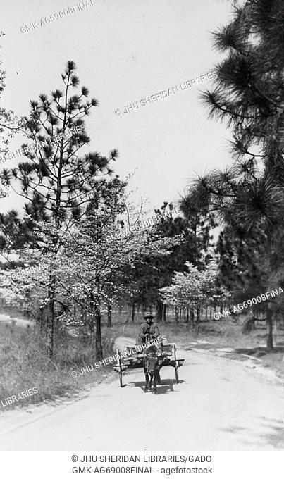 African American male on wagon driven by small cow, wearing dark suit, riding along dirt pathway lined by trees, 1915