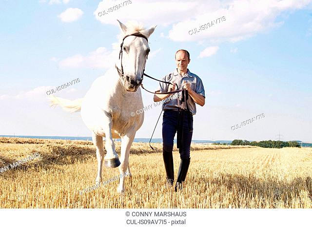 Man training trotting white horse in field