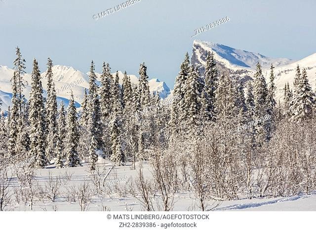 View over Sarek national park in winter season with snowy trees and blue sky, Gällivare, Swedish Lapland, Sweden