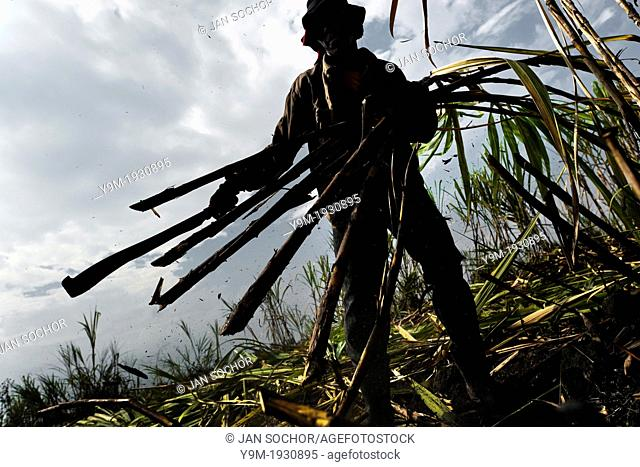 A worker carries sugar cane stalks in a field near Florida, Valle del Cauca, Colombia, 25 May 2012 The Cauca River valley is the booming centre of agriculture...