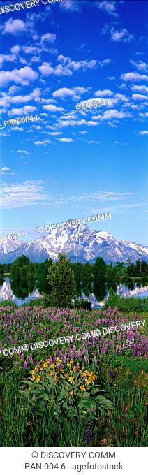 Lupine & Balsam Root in Springtime, Grand Teton National Park, Wyoming, USA
