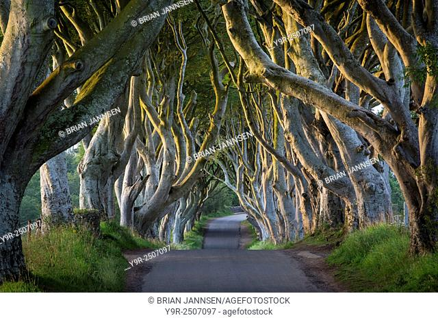 18th Century Beech Tree lined road known as the Dark Hedges near Stanocum, County Antrim, Northern Ireland, UK