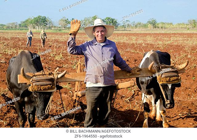 Trinidad Cuba farmer with traditional plow with oxen in rich Cuban soil planting corn