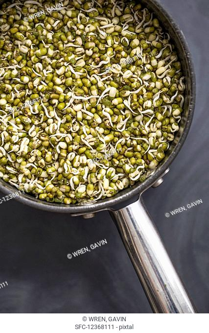 A saucepan full of sprouted mung beans on a slate surface