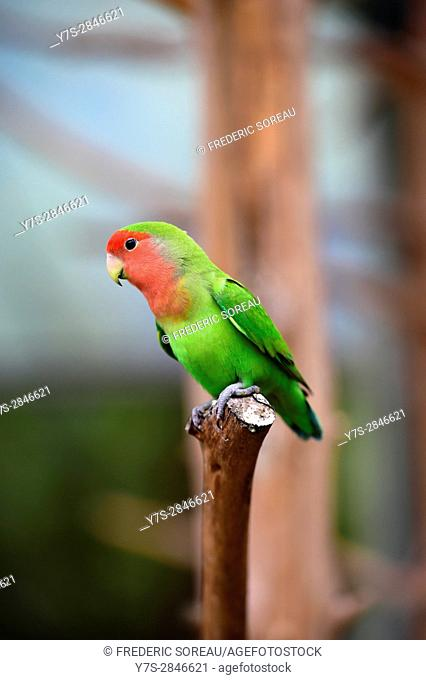 Parrot in Hallim Park, Jeju island, South Korea