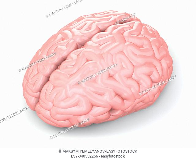 Human brain on white isolated background. 3d