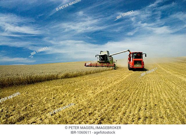 Claas combine-harvester and Holmer transport vehicle harvesting wheat, near Heilbronn/Neckar, Germany, Europe