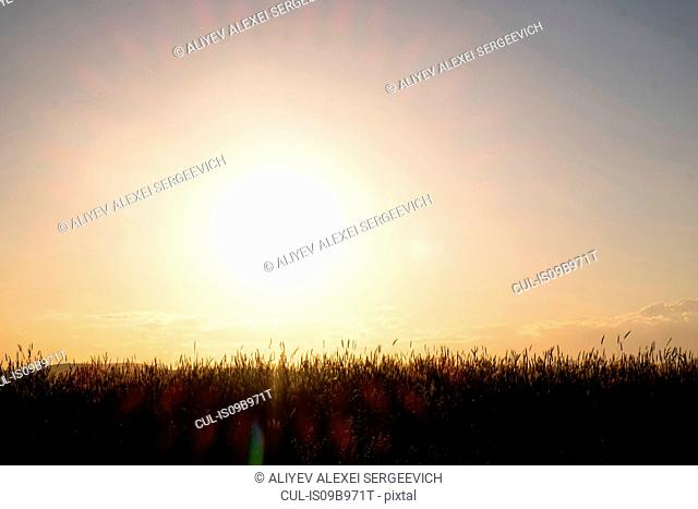 Scenic rural view of field at sunset, Ural, Chelyabinsk, Russia, Europe