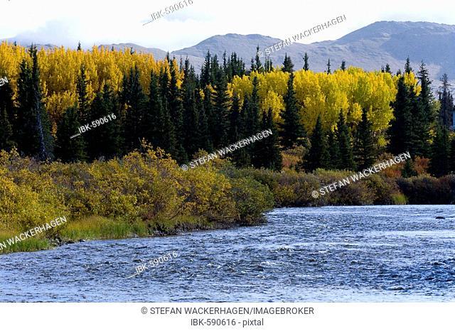 Fall colors, Autumnal mood, Jarvis River, Kluane National Park, Yukon Territory, Canada