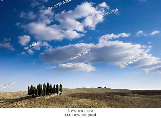 View of cypress trees, Siena, Valle D'Orcia, Tuscany, Italy