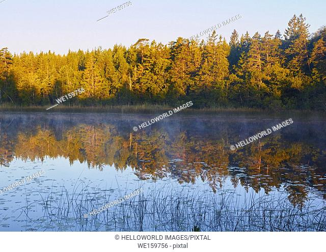 Trees reflected in lake on misty summer morning, Ljustero, Stockholm County, Sweden, Scandinavia. . Ljustero is an island in the northern part of the Stockholm...