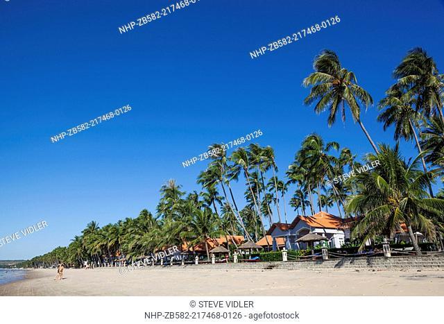 Vietnam, Mui Ne, Mui Ne Beach, Palm Trees
