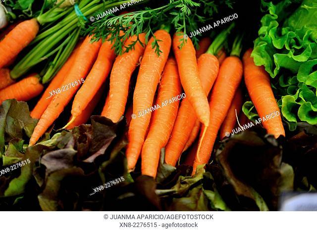Carrots, Daucus Carota