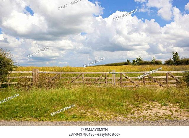 a new wooden gate on a field of ripening oilseed rape with grass and hawthorn hedgerow under a blue summer sky in the yorkshire wolds