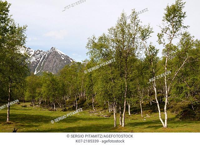 Svartisen, Norway