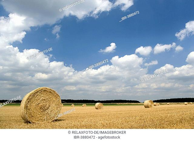 Field with straw bales against a blue sky with white clouds, Beckedorf, Lower Saxony, Germany