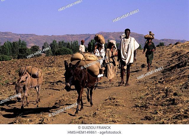 Ethiopia, region of the lake Tana, peasants near the village of Tis Abay