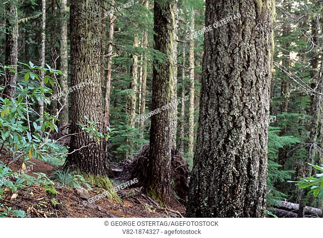 Ancient forest, Table Rock Wilderness, Salem District-Bureau of Land Management, Oregon