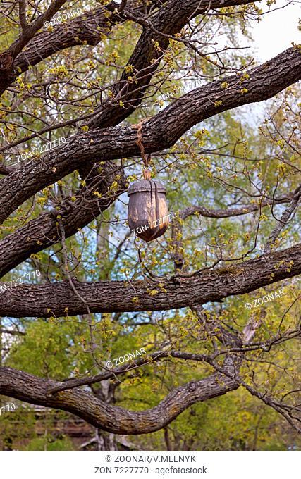 wooden acorn on the tree