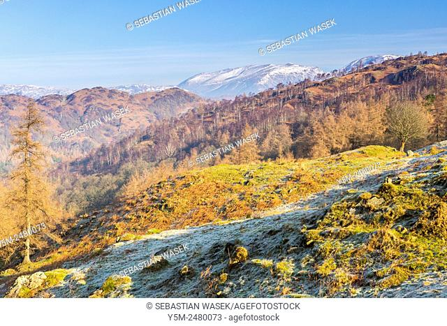 A view from Tarn Hows Intake towards The Old Man of Coniston, Lake District National Park, Cumbria, England, United Kingdom, Europe