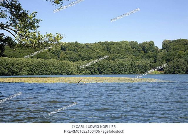 Haussee, Feldberger Seenlandschaft, Mecklenburgische Seenplatte district, Mecklenburg-Vorpommern, Germany / Haussee, Feldberger Seenlandschaft