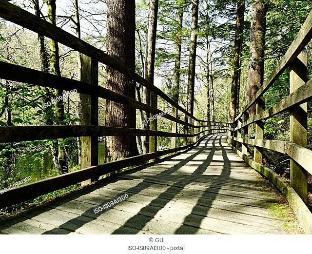Bridge in forest, Betws-y-coed, Snowdonia, Wales