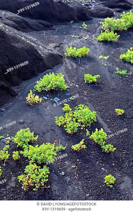 El Hierro, Canary Islands  Geology  Black volcanic screes rock sand on slopes north of Lomo del Trebol near Sabinosa