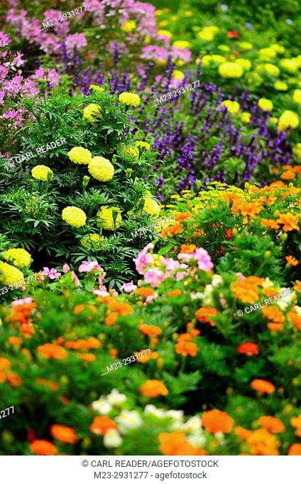 Bright colors dominate in a garden in soft-focus, Pennsylvania, USA