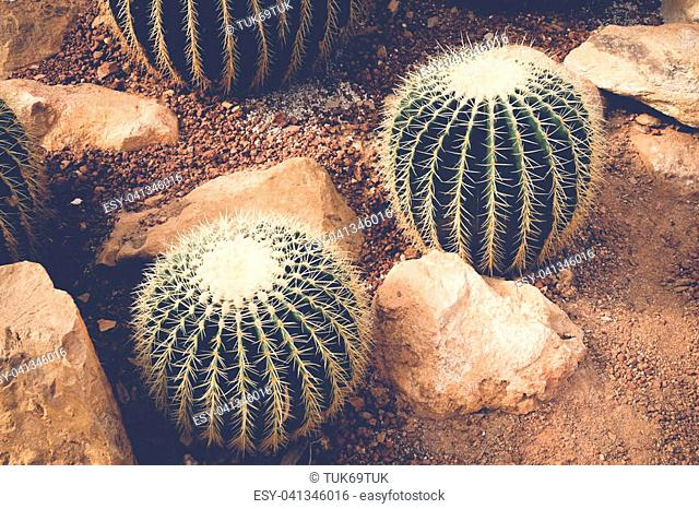 cactus or succulent with filter effect retro vintage style