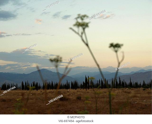 Italian cypress (Cupressus sempervirens), impressive natural scenery, silhouette of cypresses, Serbia and Montenegro  - Serbien und Montenegro, 28/01/2008