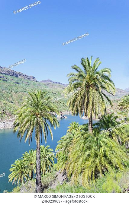 River flowing through mountain, elevated view, Gran Canaria, Canary Islands, Spain