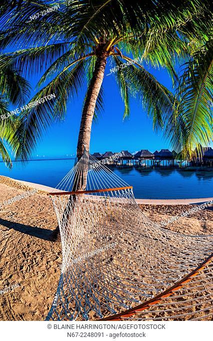 Hammock on the beach, Hilton Moorea Lagoon Resort, island of Moorea, French Polynesia