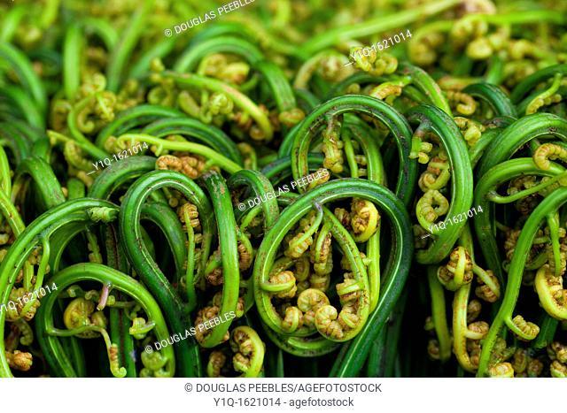 Edible fern, Hilo Market, Island of Hawaii
