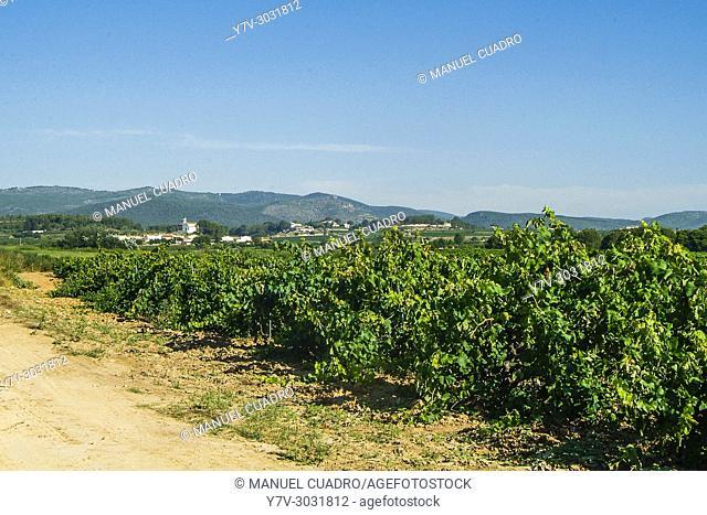 Bodega Oriol Rossell, Penedes region (Denominación de Origen Penedes). Barcelona province, Catalonia, Spain