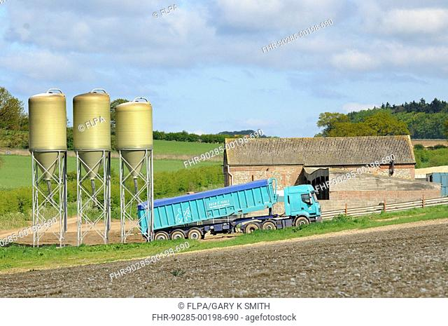 Pig farming, pig feed silos being refilled from lorry trailer, Norfolk, England, may