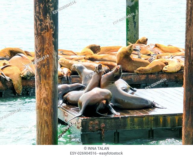 Sea lions at Pier 39 in San Francisco, USA