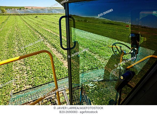 Combine spinach, Agricultural field, Funes, Navarra, Spain, Europe