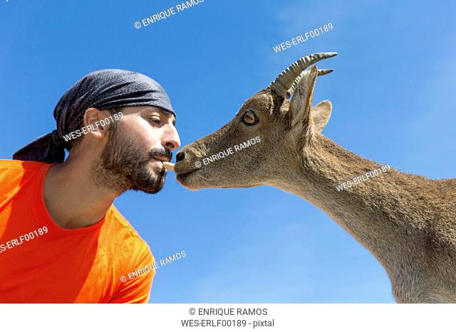 Man feeding Western Spanish ibex