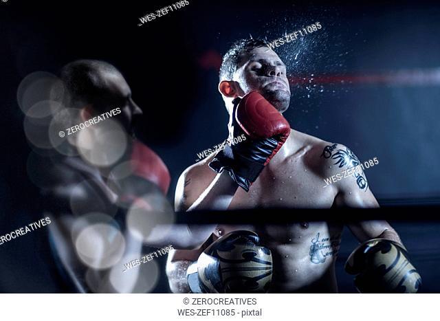 Boxer hitting opponent