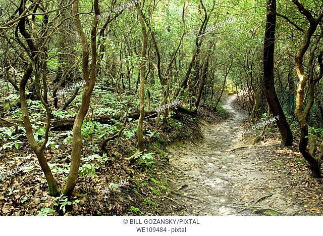 Cat Gap Trail - Pisgah National Forest, near Brevard, North Carolina