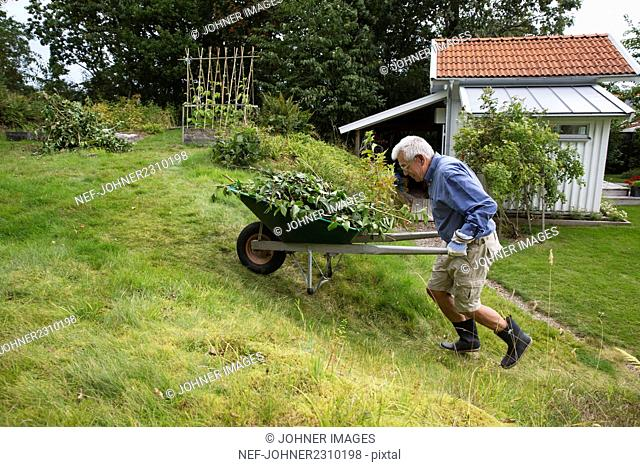 Man pushing wheelbarrow in garden