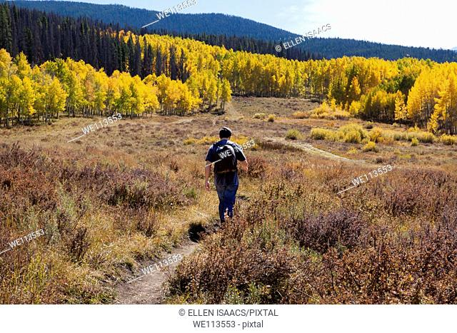 Asian man walking along a trail in a meadow toward gove of yellow aspen trees in autumn in Colorado