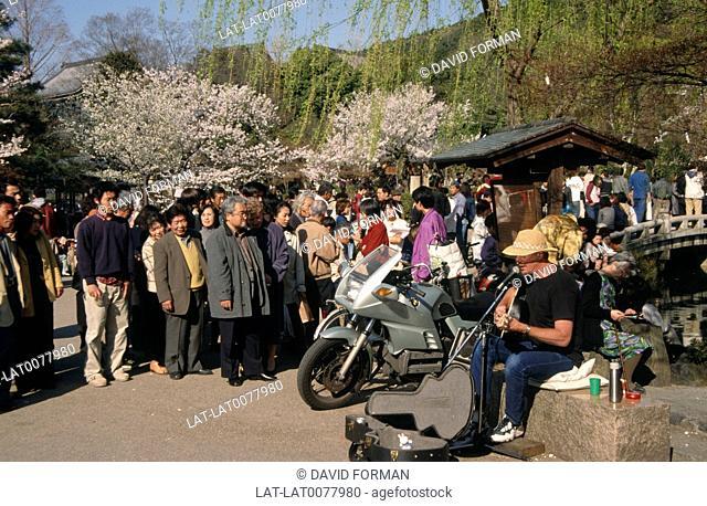Maruyama Park. Busker playing guitar/ singing. Crowds. Motorbike. White blossom tree. Bridge
