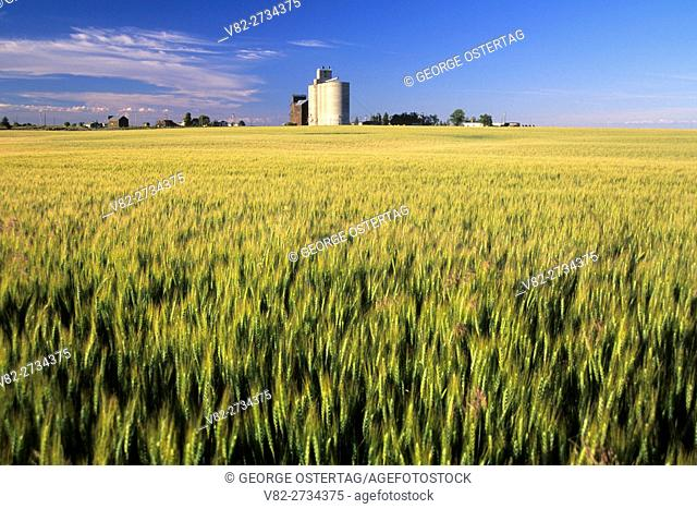 Grain elevator across wheat field, Journey through Time National Scenic Byway, Kent, Oregon