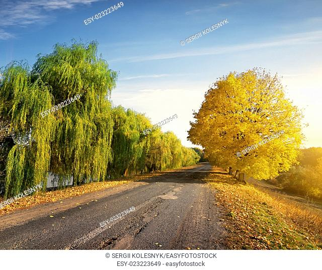 Road through autumn forest in sunny day