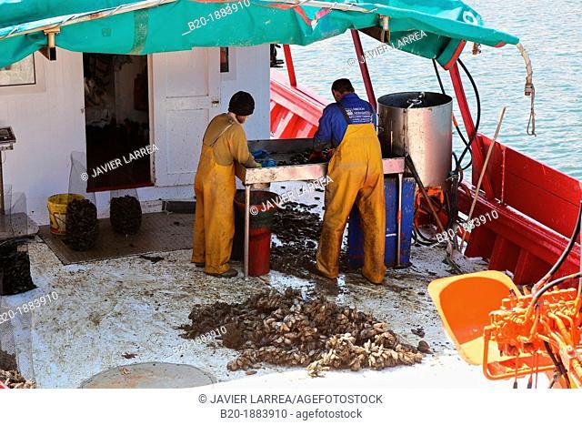 Mussels, Fishing port, Freixo, Ria de Muros e Noia, A Coruña province, Galicia, Spain