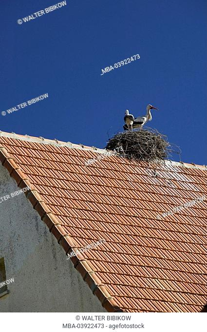 Morocco, Ifrane, house-roof, storks, nest, Africa, North-Africa, city, university-city, buildings, roof, brick-roof, animals, birds, nests, nesting place