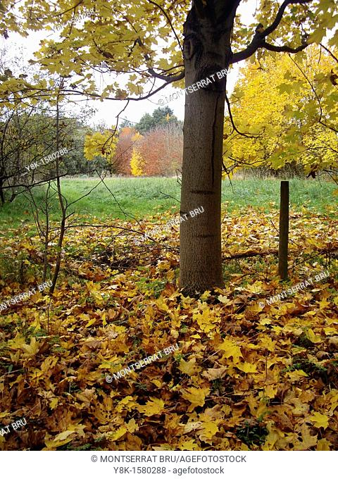 Fallen leaves carpet